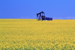 Canola field oil pump closeup