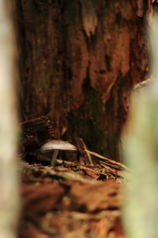 Mushroom in hollow tree