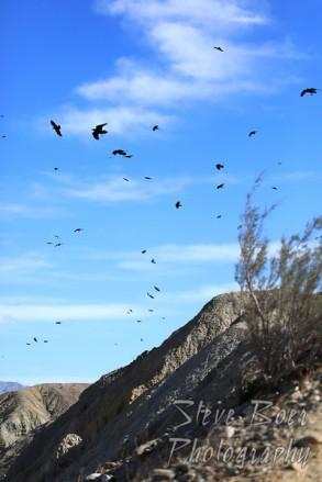 Crows enjoying an updraft