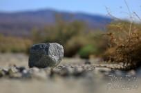 Rock and bush