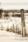 Old fence post in winter