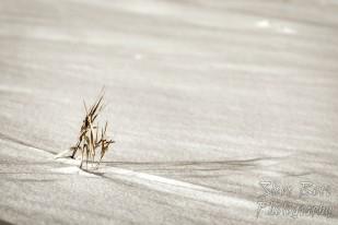 Dead grass in snowy field