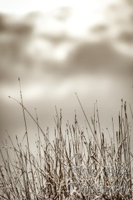 Frozen grass under a cloudy sky