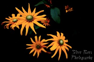 Isolated orange flowers