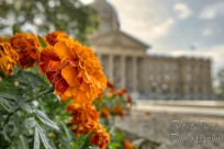 Flower at Alberta Legislature